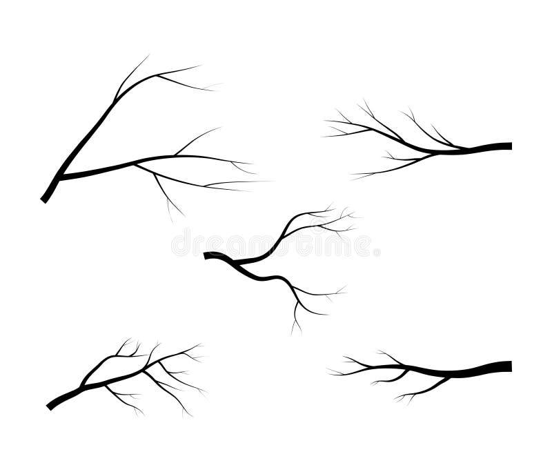 光秃的分支树剪影传染媒介标志象设计 在白色背景的美好的例证 向量例证