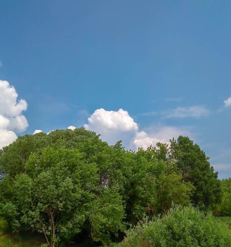 光秃的天空云彩和森林 免版税库存图片