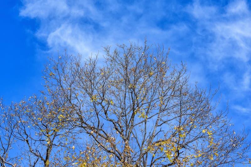 光秃的树冠在秋天在好日子 库存照片