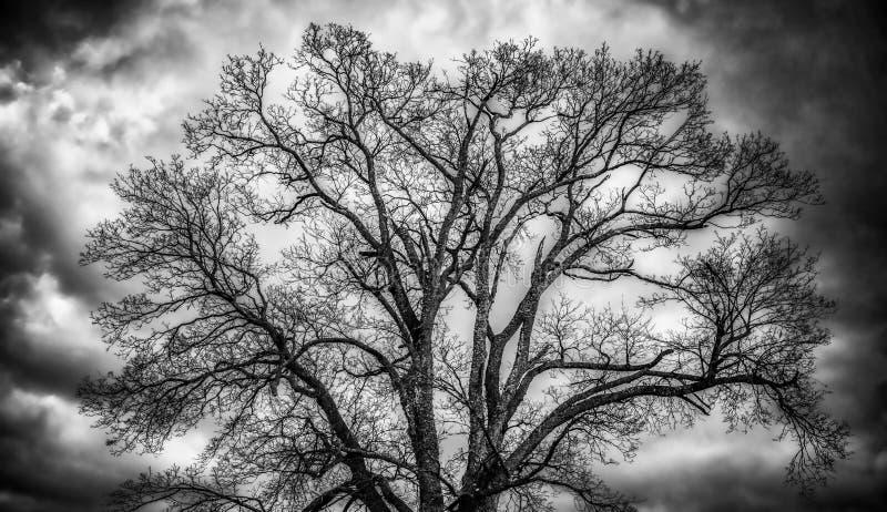 光秃的树和云彩 库存照片
