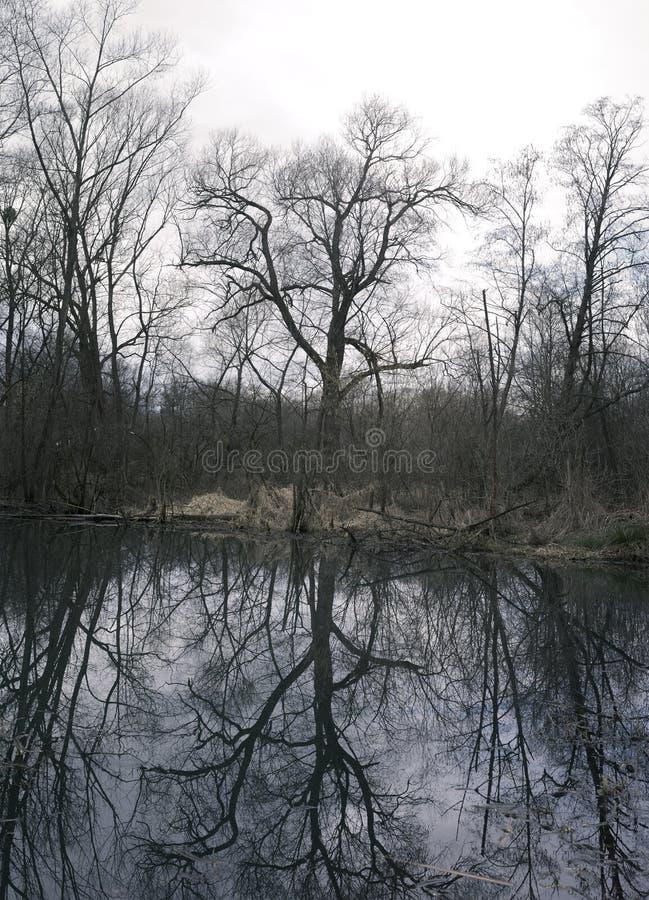 光秃的树和池塘在冬天 库存图片
