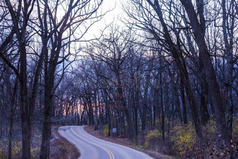 光秃的树和草在新的格拉鲁斯森林国家公园 免版税库存照片