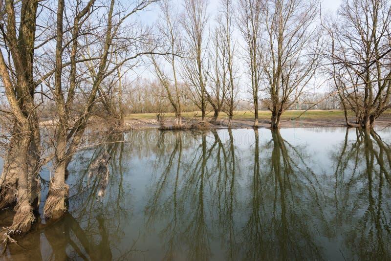 光秃的树在一个被充斥的洪泛区的水中 库存图片