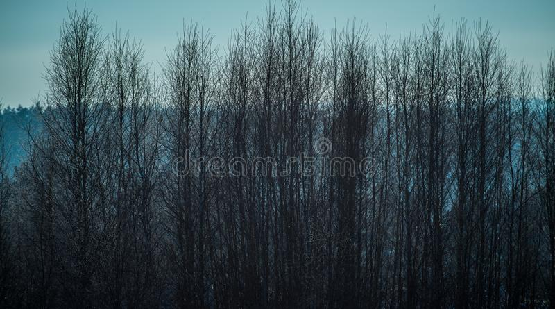 光秃的树在冬天晚上 免版税库存图片
