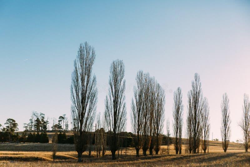 光秃的树行在领域的 免版税库存图片