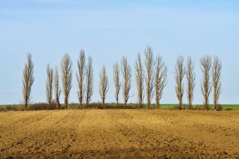 光秃的树行由领域的 图库摄影