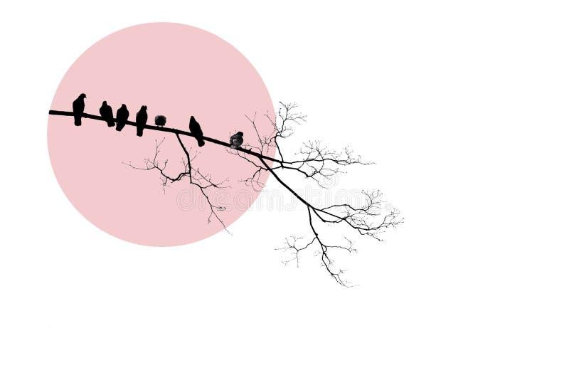 光秃的树黑剪影与鸟鸠的在桃红色圈子的分支 Minimalistic设计,白色背景 皇族释放例证