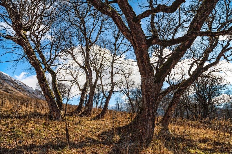 光秃的秋天树美好的晴朗的风景风景与蓝天的 高加索山脉,索契,俄罗斯 免版税库存照片
