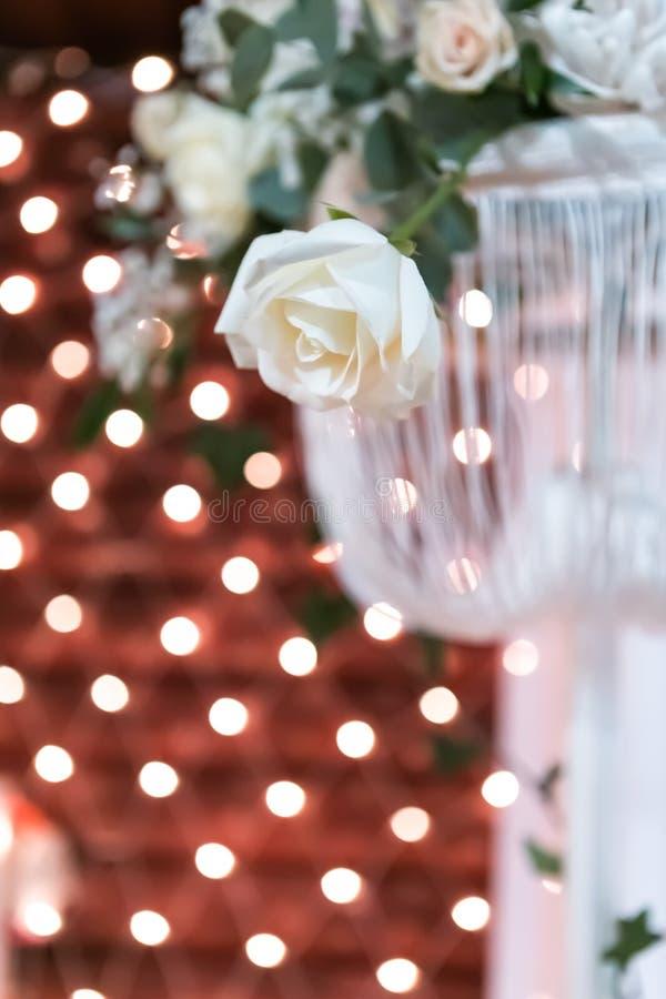 光线影响背景的白玫瑰  免版税图库摄影