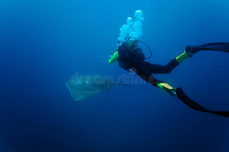 光芒水下水肺的蜇 库存图片