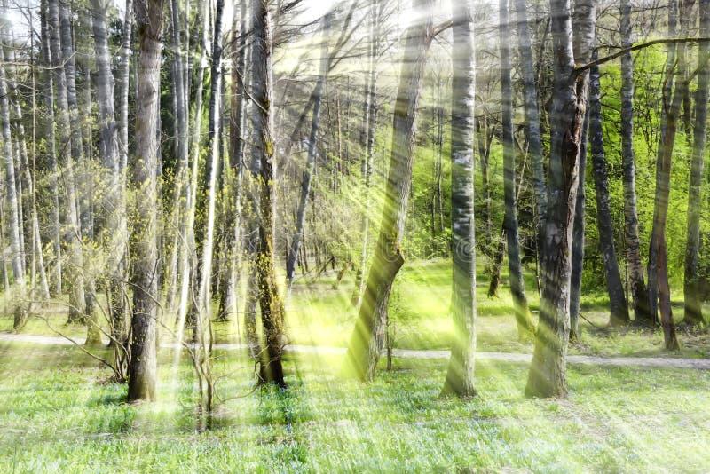 光芒通过树 库存照片