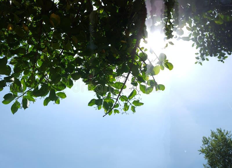 光通过分支 库存图片