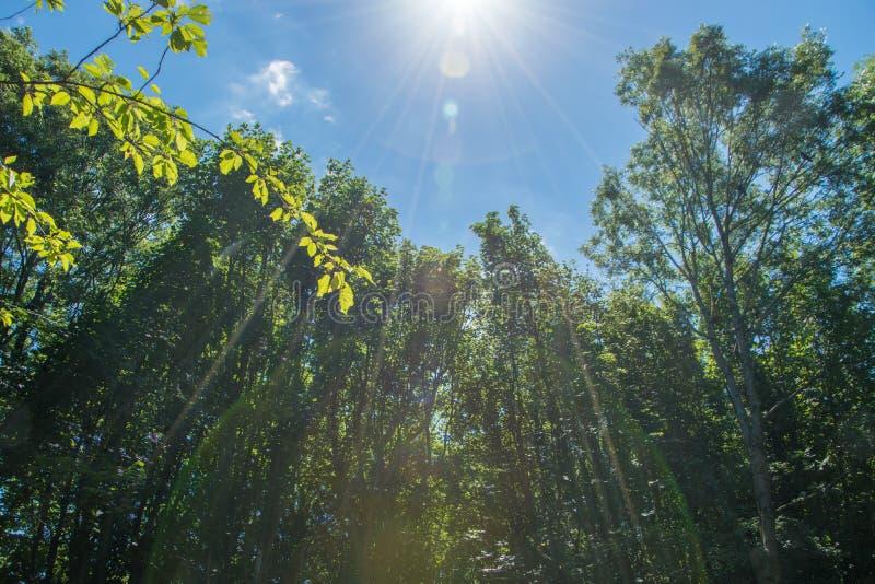 光通过森林 免版税库存图片