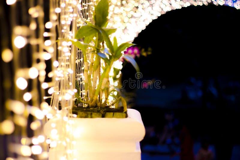 光隧道在Nabana没有佐藤庭院在晚上在冬天, 亚洲,著名 库存图片