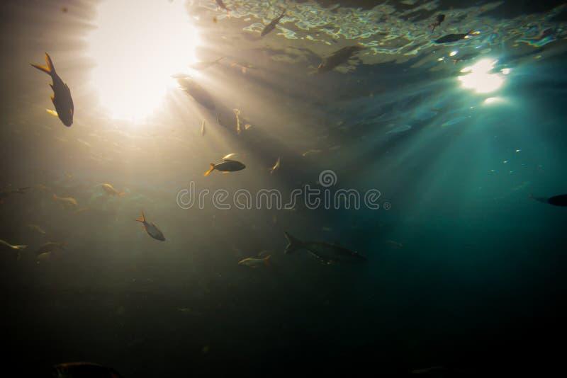 光,阳光水中 免版税库存图片