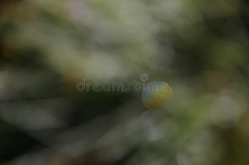 光&颜色舞蹈 免版税库存图片
