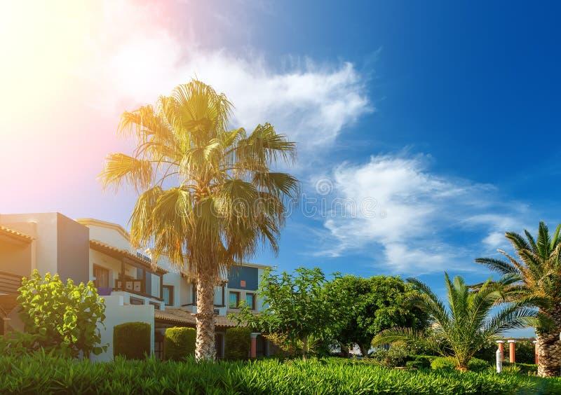 克利特,希腊海岛海岸,有棕榈树的、美丽的草坪和大厦在阳光下和与云彩的明亮的天空 免版税库存图片