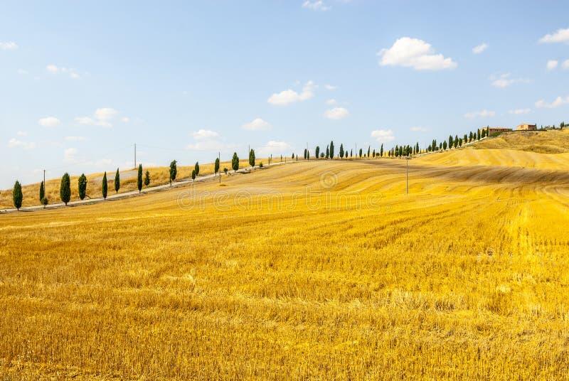 克利特senesi,特色景观在Val d'Orcia 免版税库存照片