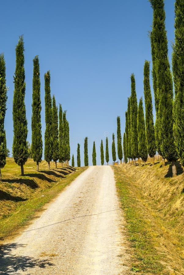 克利特senesi,特色景观在Val d'Orcia 库存图片