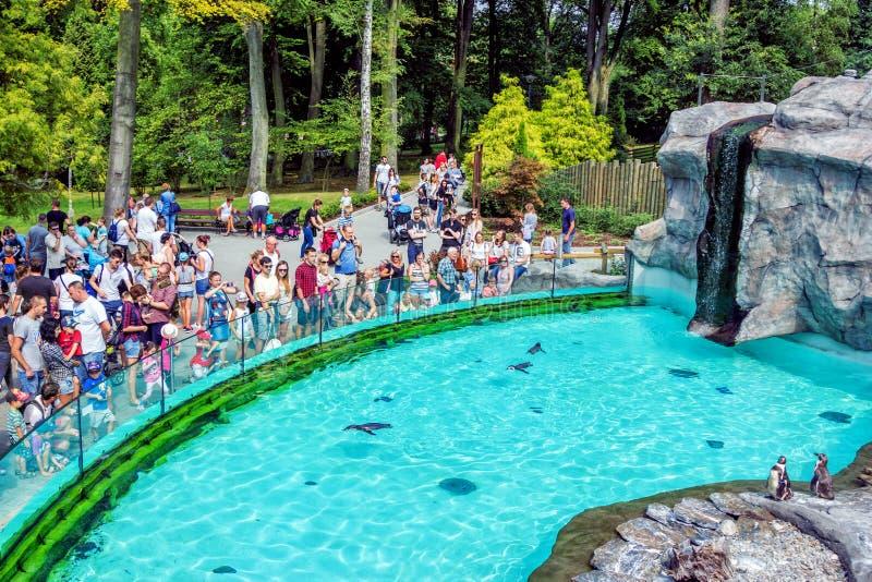 """克拉科夫动物园访客和游人†""""孩子和成人临近与企鹅的水池 免版税库存图片"""