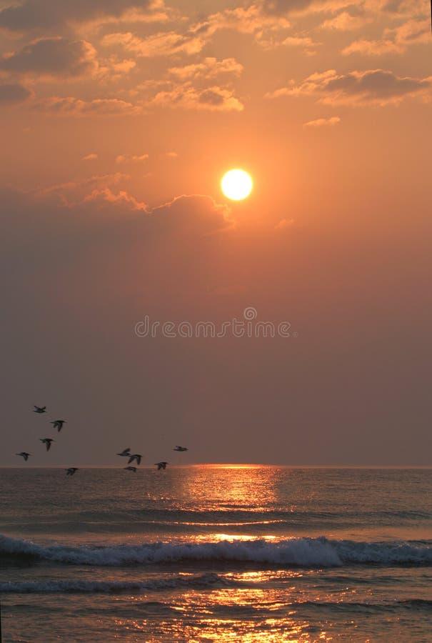克服海洋的鸟 库存照片