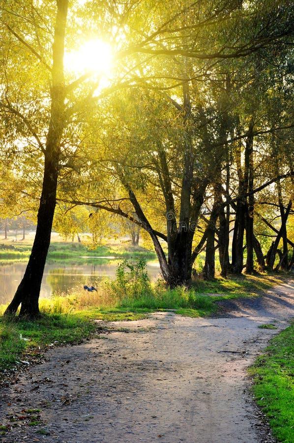 克服的秋天森林公路风景 图库摄影