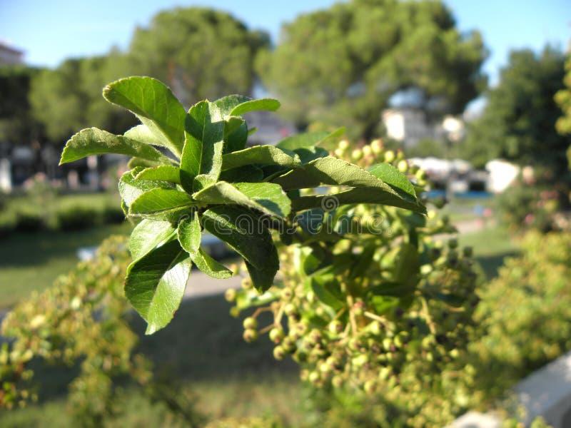 克罗地亚人flora2 免版税库存图片