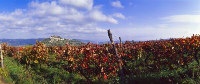 克罗地亚motovun葡萄园 免版税库存照片