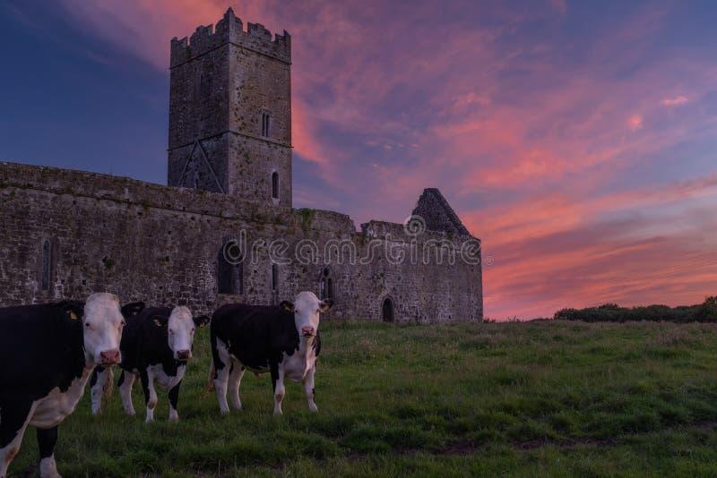 克莱尔修道院废墟的看法Augustinian修道院外部恩尼斯,克莱尔郡,有美好的日落的爱尔兰 库存照片