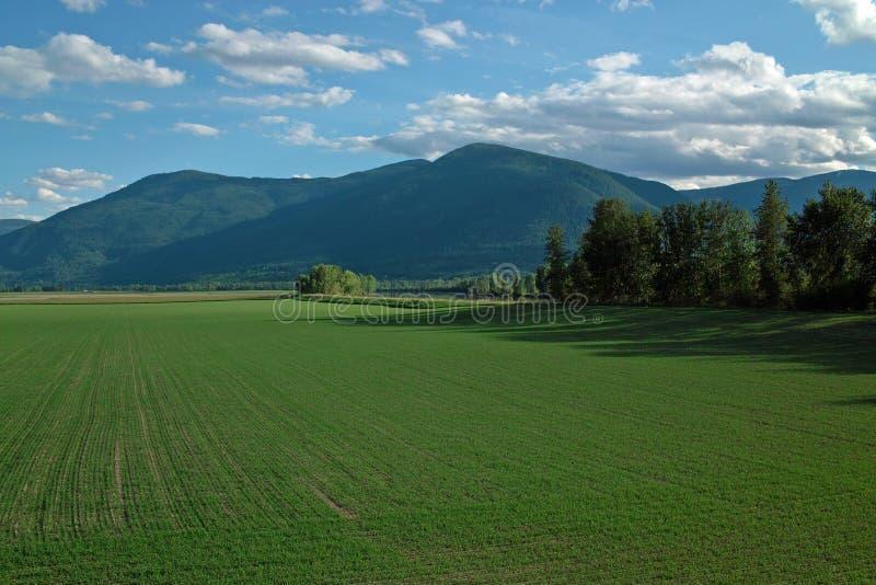 克里斯顿BC农场,加拿大。 免版税库存照片