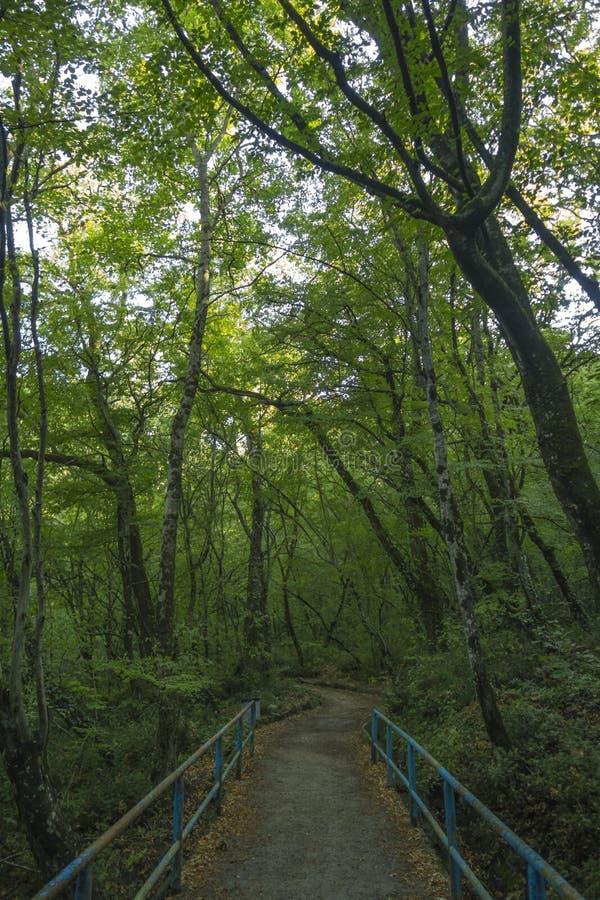 克里米亚半岛自然 沙皇道路 图库摄影