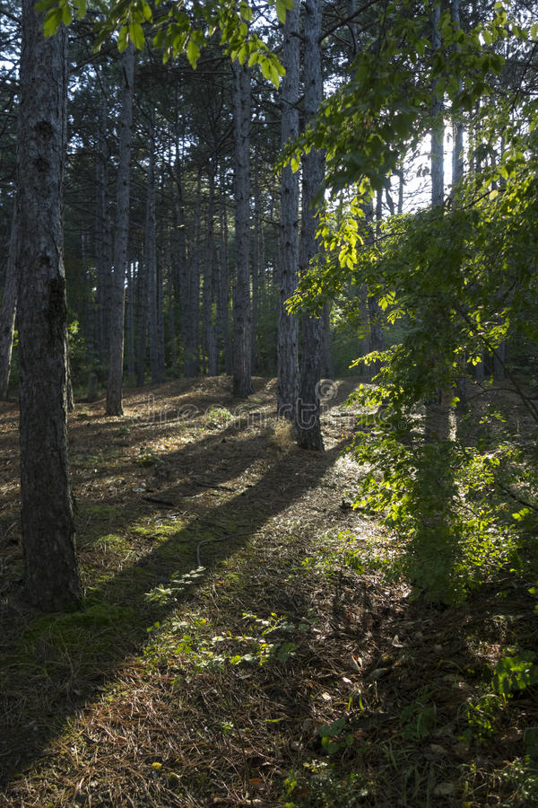 克里米亚半岛自然 沙皇道路 库存照片