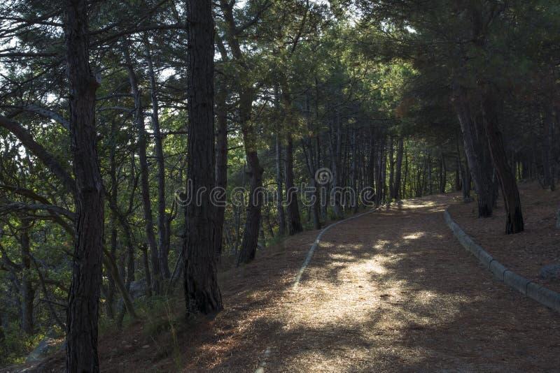 克里米亚半岛自然 沙皇道路 免版税库存照片