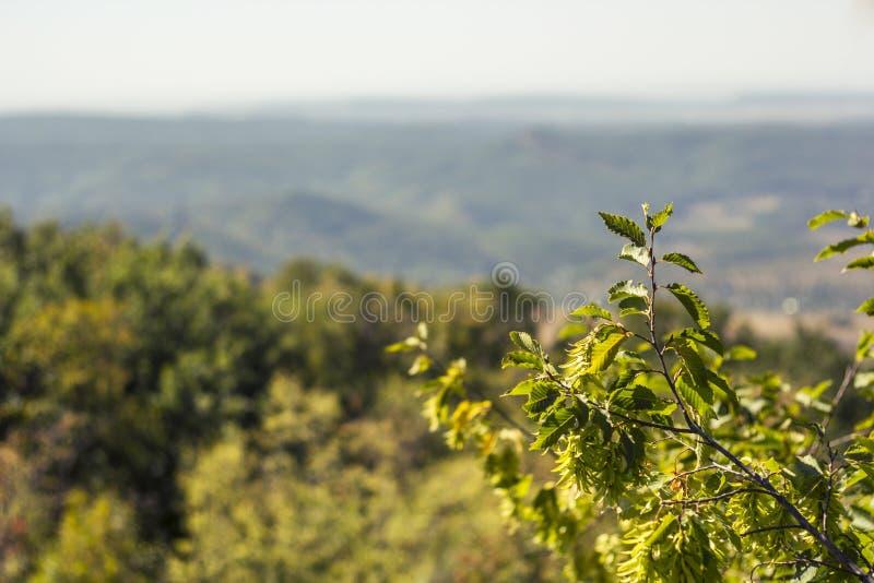克里米亚半岛自然 库存图片