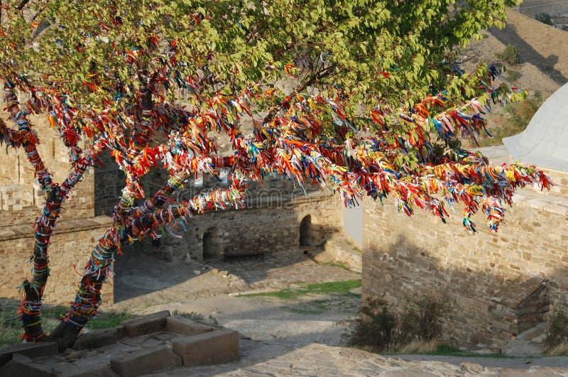 克里米亚礼拜式sudak结构树婚礼 库存图片