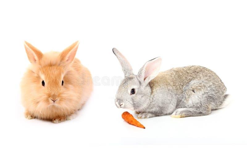 兔子二个年轻人 免版税库存图片