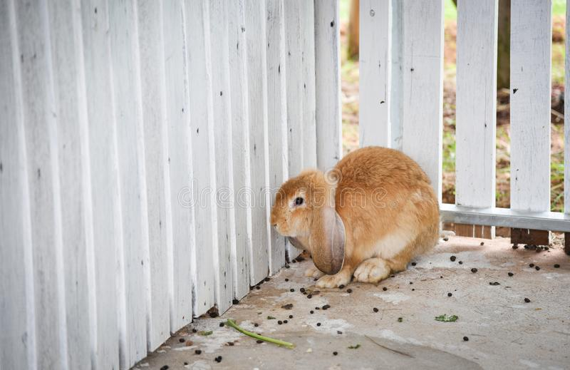 兔子农场 库存图片