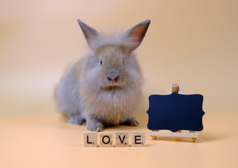兔子和标签爱在浅褐色的背景 免版税库存图片