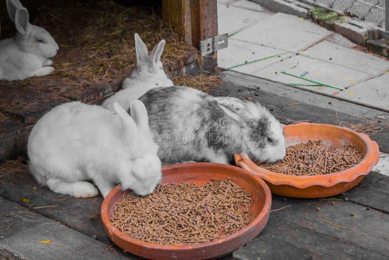 兔子和食物 免版税图库摄影