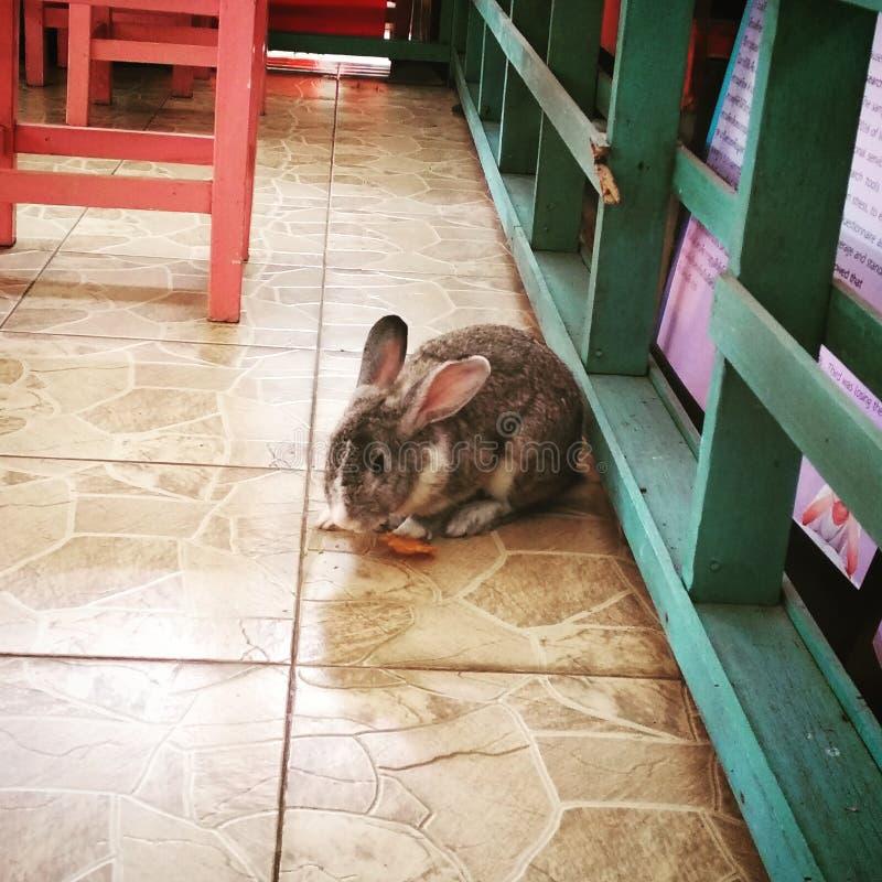 兔子在面店 免版税库存图片