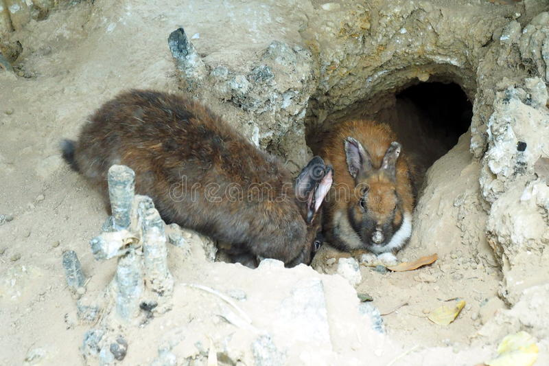 兔子在洞穴 免版税库存照片