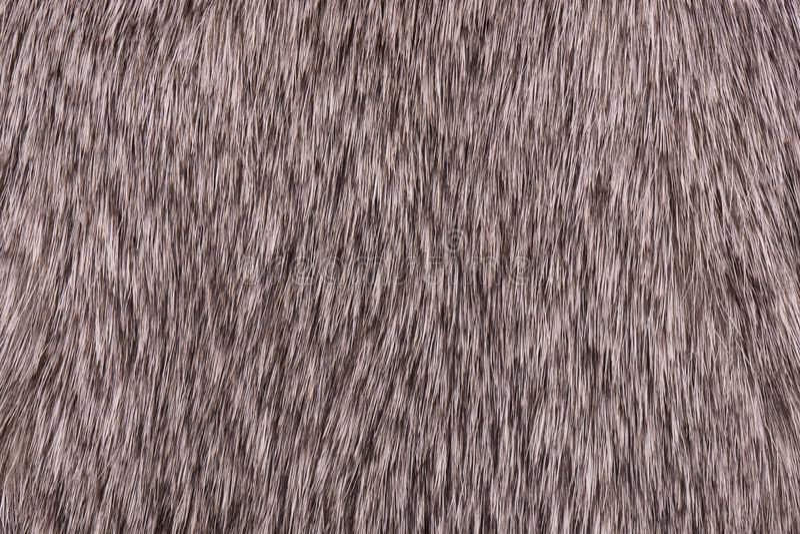 兔子毛皮特写镜头的片段 灰色兔子毛皮 免版税库存照片