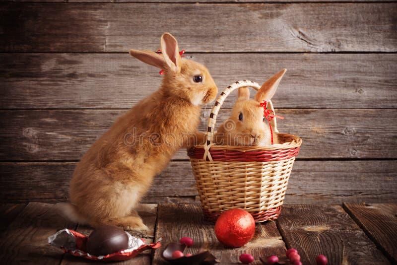 Download 兔子用在木背景的朱古力蛋 库存图片. 图片 包括有 beauvoir, 鸡蛋, 兔宝宝, 敌意, 复活节 - 62529679