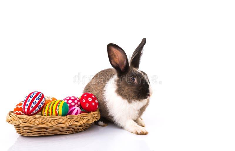 兔子用被隔绝的复活节彩蛋 图库摄影