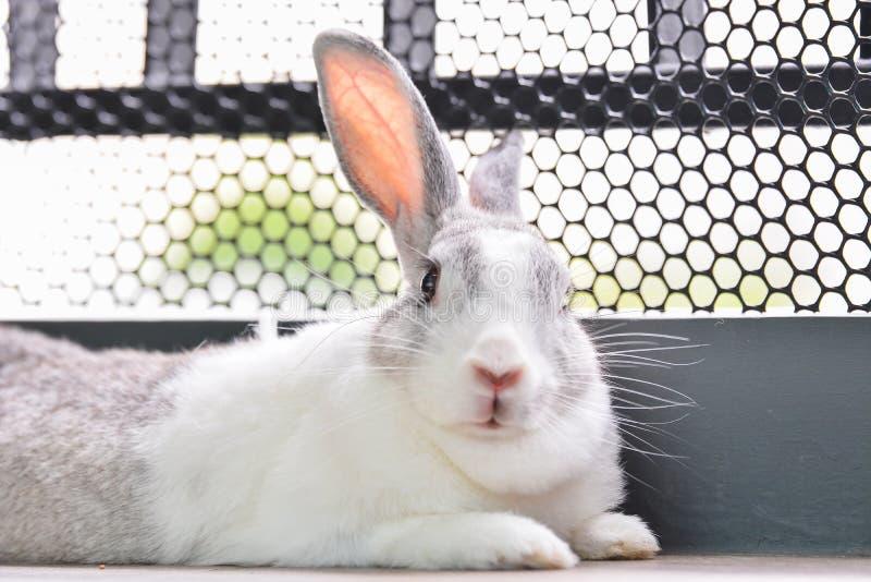 兔子看 免版税库存图片