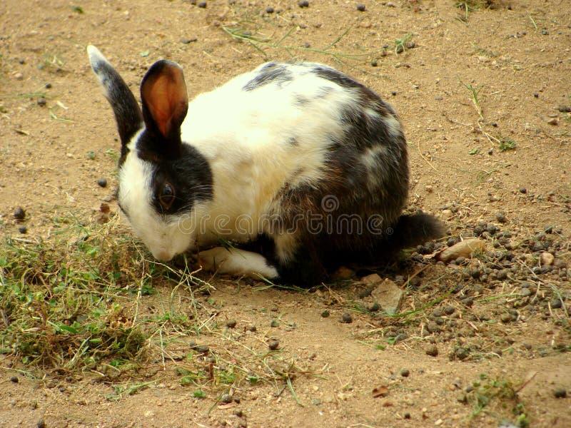 兔子年轻人 免版税图库摄影