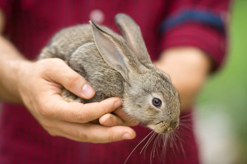 动物人们和兔子.问题的,复活节.蚂蚁聚宝怎么贷500圆图片