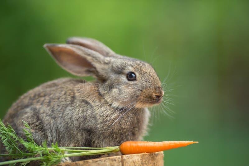自然希望的兔子美丽的农场.狂放,动物.梦见自己杀兔子和蛇图片