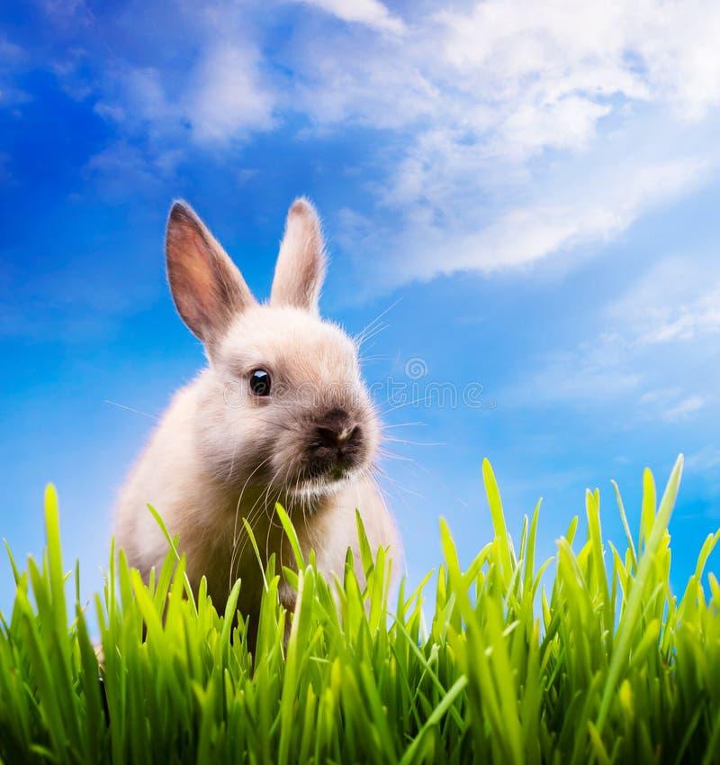 兔宝宝复活节草绿色一点 库存图片