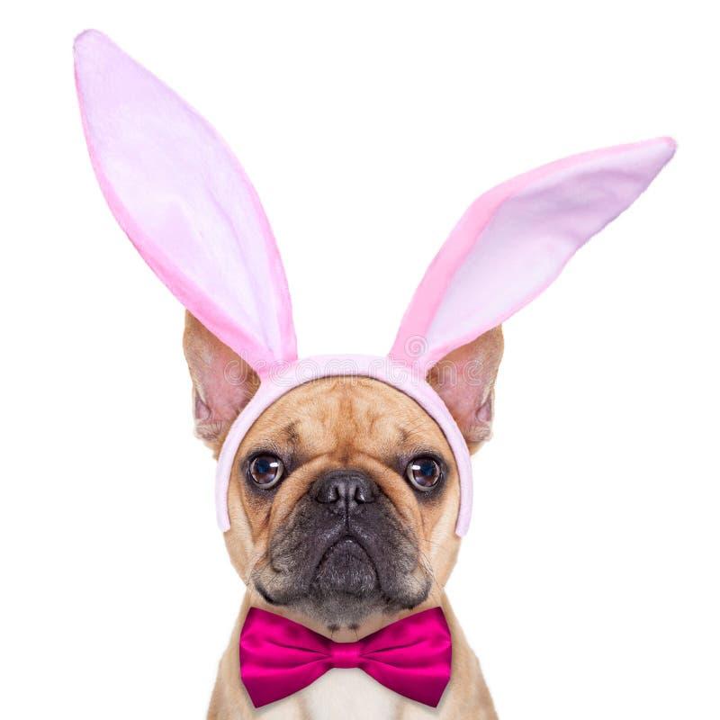 兔宝宝复活节耳朵狗 免版税图库摄影